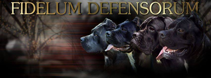 Fidelum Defensorum Cane Corso kennel FCI