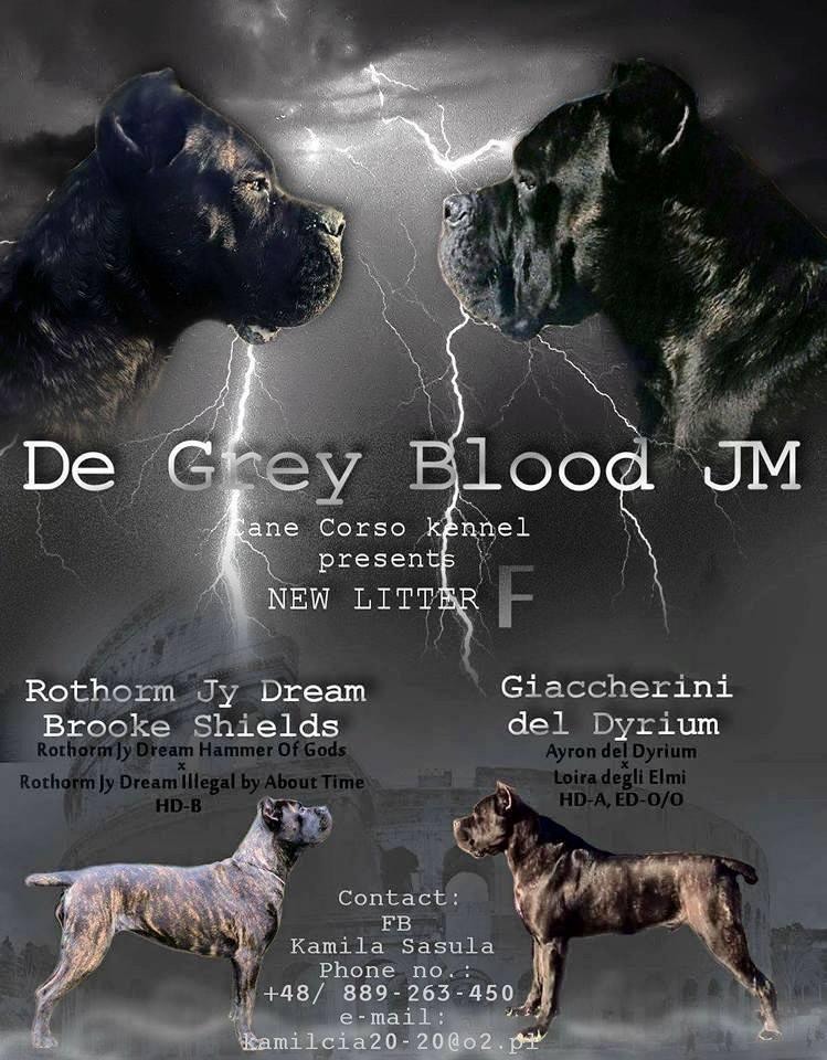 De Grey Blood JM